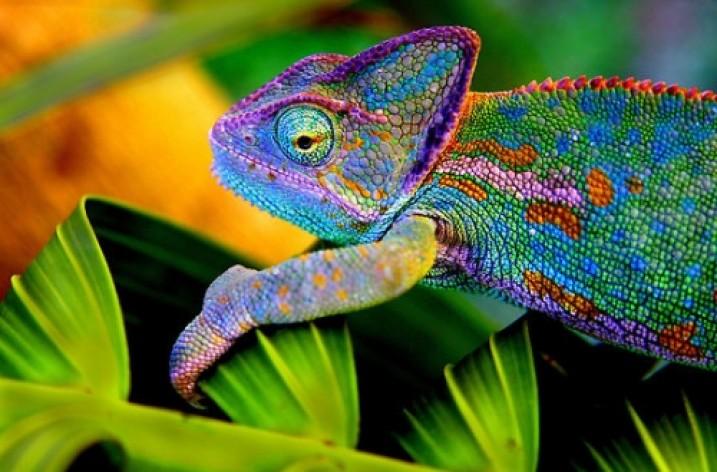 L'economia del camaleonte: valorizzare i nuovi attori del sistema economico attuale